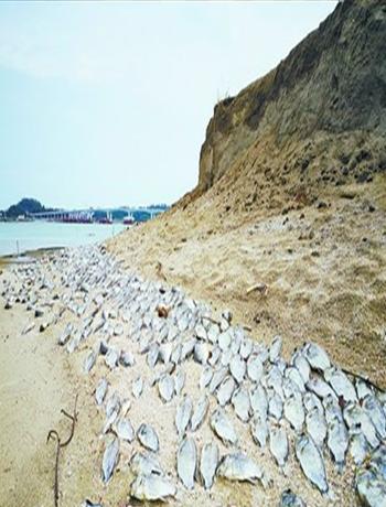 魚殤!同安丙洲沙灘現數十米死魚,臭氣熏天!