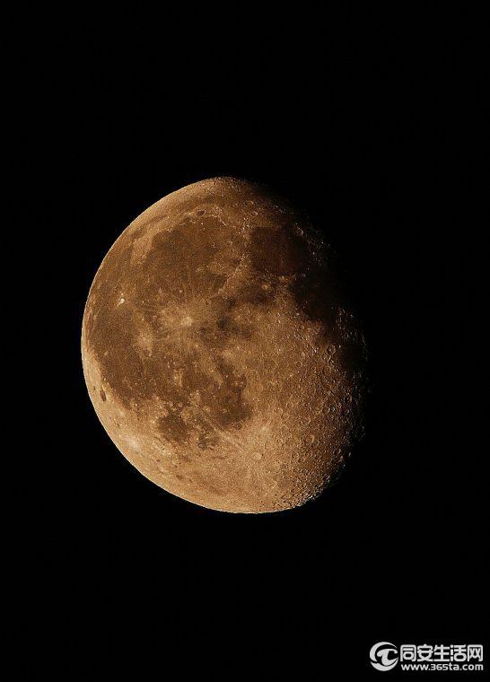 月亮里的桂树图
