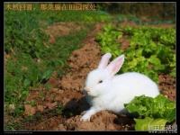 [阿罪原創] 高清大圖 偷拍兔兔山野田間裸奔~